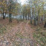 Кусты (Богородицкое, Ивановский пруд), Хотынецкий район