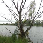 Воейково, Хотынецкий район