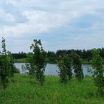 Кошелево, Урицкий район