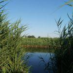 Воронцовский пруд (руч. Воронец), Хотынецкий район